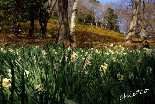 吾妻山公園-302