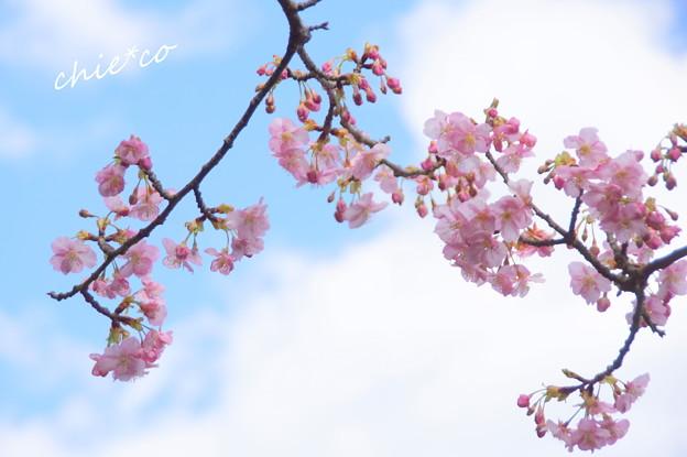 写真: 長谷寺-178
