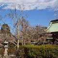 写真: 長谷寺-179