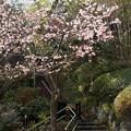 写真: 長谷寺-183