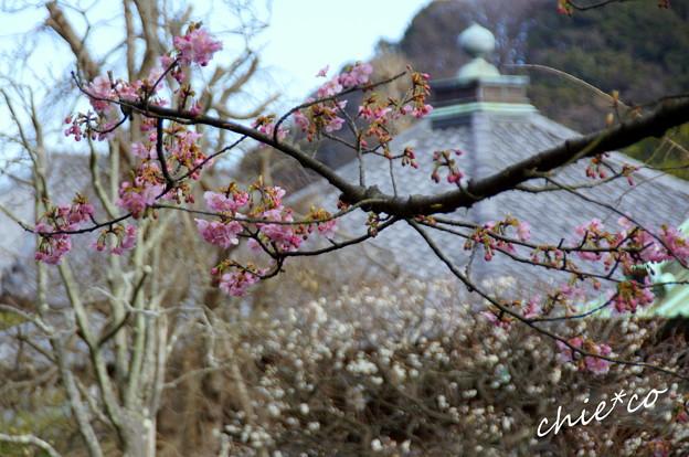 写真: 長谷寺-185