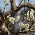 写真: 長谷寺-184