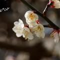 写真: 長谷寺-193