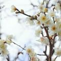 写真: 長谷寺-197