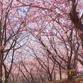 写真: 三浦海岸-211