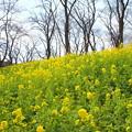 写真: 横浜根岸森林公園-125