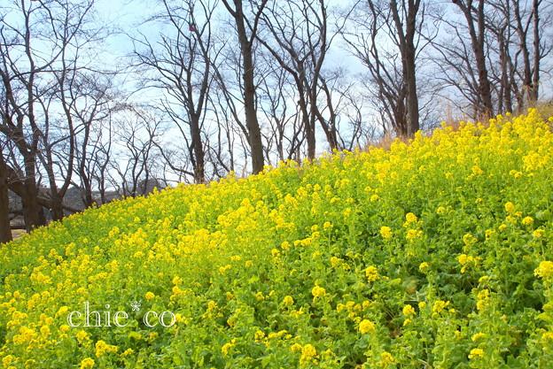 写真: 横浜根岸森林公園-126