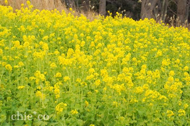 写真: 横浜根岸森林公園-129