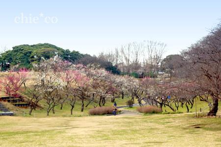 横浜根岸森林公園-130