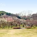 写真: 横浜根岸森林公園-130