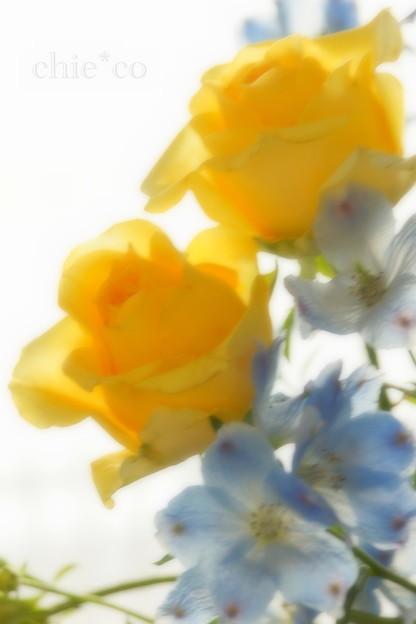 黄色の薔薇と。。