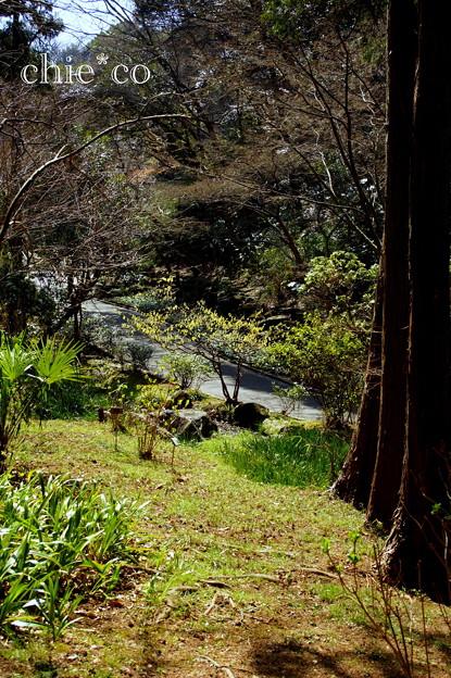写真: 久良岐公園~3