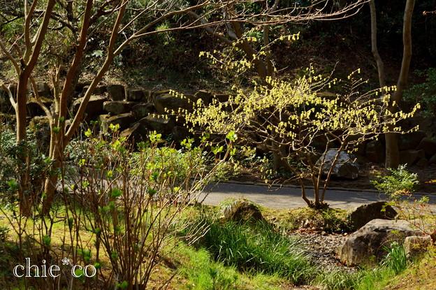 写真: 久良岐公園~5