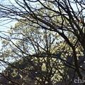 写真: 久良岐公園~10