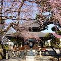 写真: 鎌倉-293