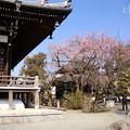 写真: 鎌倉-306