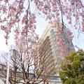 写真: Yokohama-142