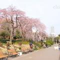 写真: Yokohama-144