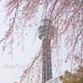 写真: Yokohama-145