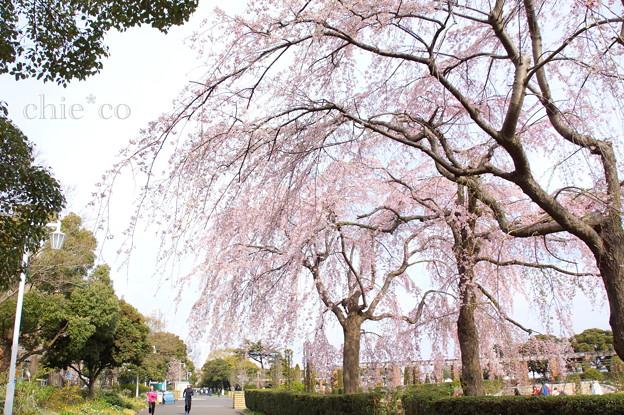 写真: Yokohama-143