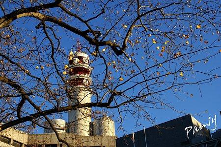 青空と・・枯れ葉の残る樹・・