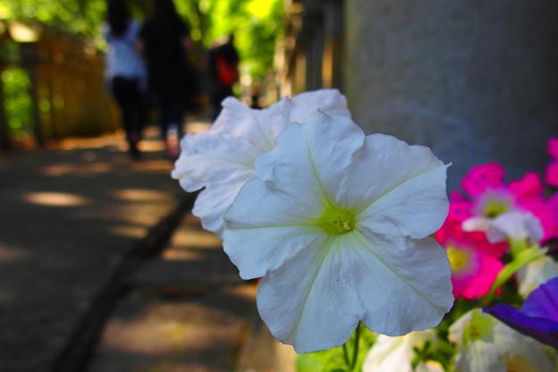 小道に咲く花
