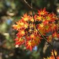 先から秋色