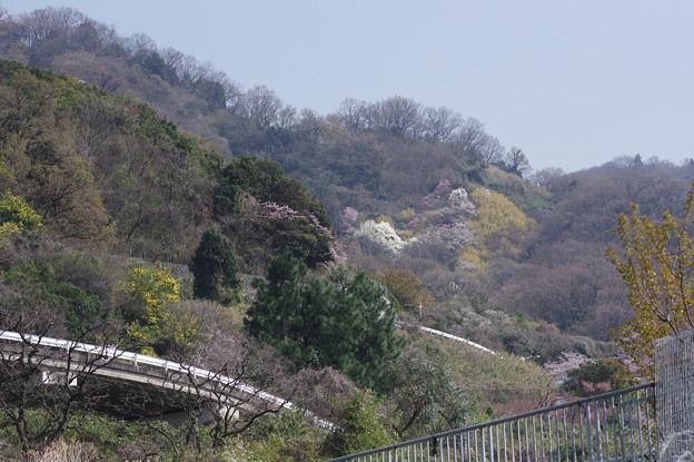 ガードレールの見える春景色