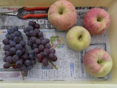 RIMG6371本日の収穫 サイズ変更