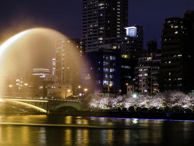 夜桜 放水