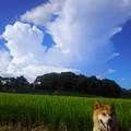 夏空の散歩道