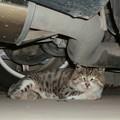 Photos: ドロボー猫くつろぐ