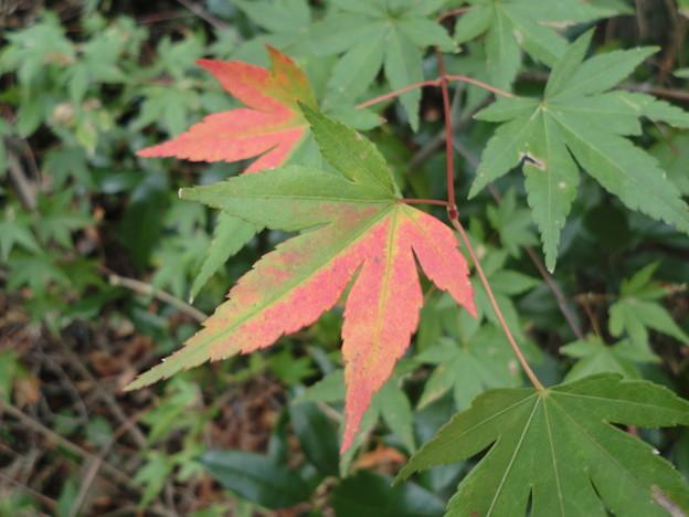 Photos: 紅葉のはじまり