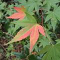 紅葉のはじまり