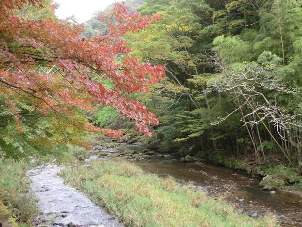紅葉と小川
