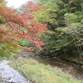 Photos: 紅葉と小川