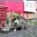 Photos: ネコの家の猫