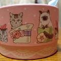 写真: 猫チョコ3