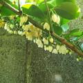 Photos: サカキ1606180006