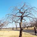 Photos: 1701220041白滝枝垂と鳥