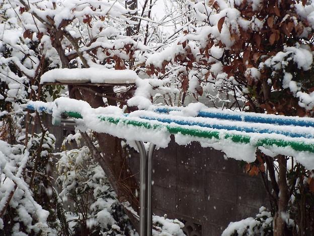 庭の雪餌台1702090006
