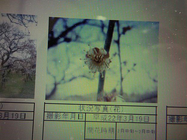 Photos: 酈懸梅B3-164 1703040014