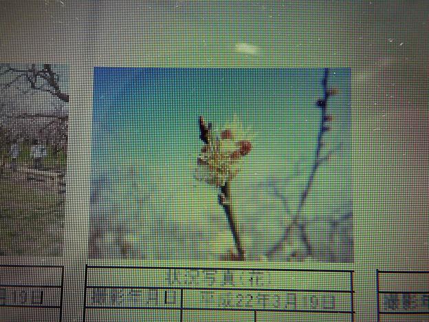 酈懸梅B3-264 1703040016