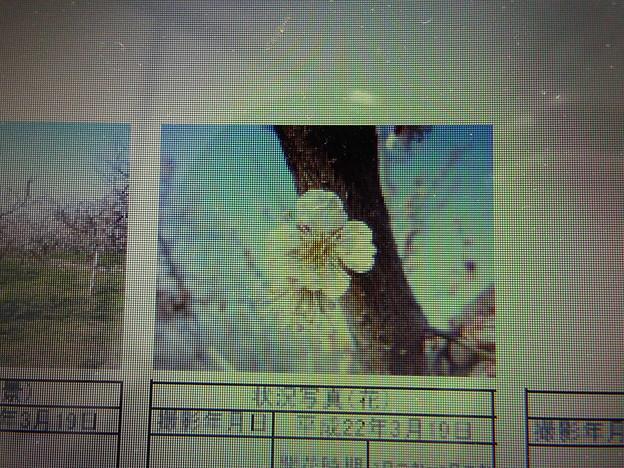 酈懸梅B3-266 1703040018