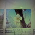 Photos: 酈懸梅B3-266 1703040018