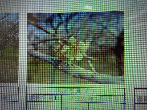 Photos: 酈懸梅B5-067 1703040026