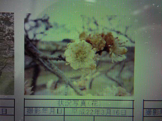 Photos: 酈懸梅C7-081 1703040034