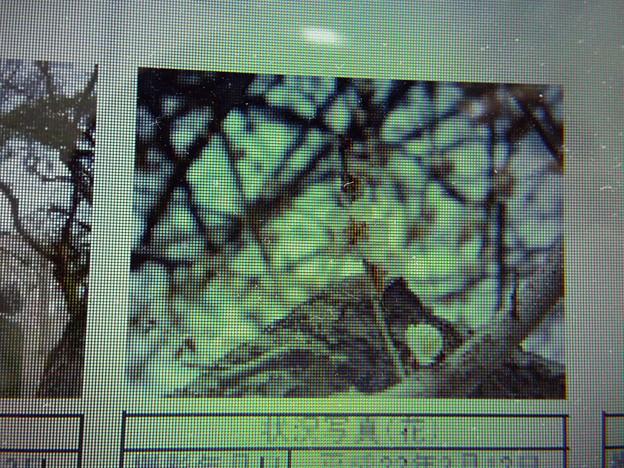 酈懸梅C7-101 1703040032