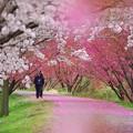 Photos: 男の花道