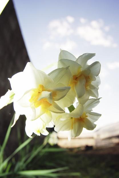 春の気配・・・?